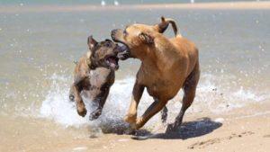 cani_in_spiaggia