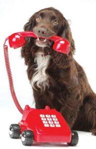 cane_con_telefono_rosso