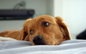 cani-solitudine
